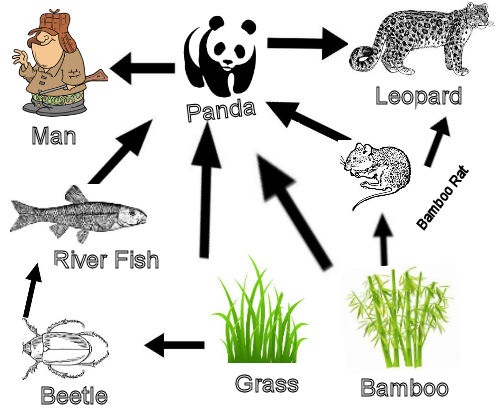 Make Your Own Food Chain Food Web